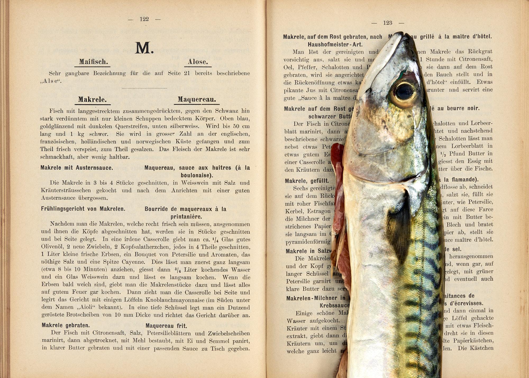 """culinary timepieces by Annette Sandner: Makrele. Gastronomisches Lexikon der Fische, Krebse und Muscheln von Mitarbeitern der """"Zeitung der Köche"""". 1900."""